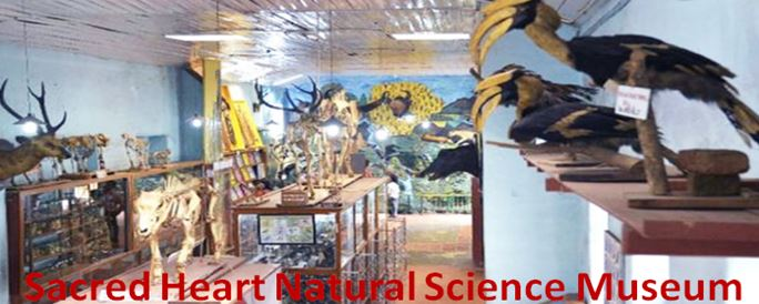 Sacred Heart Natural Science Museum