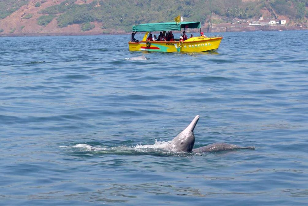 Dolphin Sightseeing Boat Tour